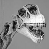 Camarasaurus Skull 3D