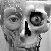 Medical Head 3D