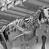 Museum Naturelle Paris  3D