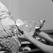 Preparation Triceratops Skull 3D