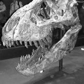 T.REX in Naturalis Leiden 3D