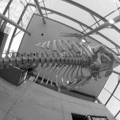 Sperm whale Rotterdam 3D GoPro