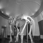 Sleleton NHM Elephant Ramon 3D Gopro