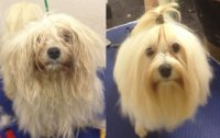 4Paws Dog Grooming