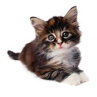 KittyTwit