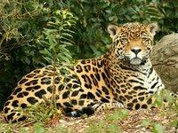 Jaguar Ecolodge