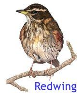 Redwing Business Intelligence