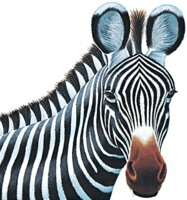 Project Zebra