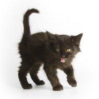 Lucky Wild Cat Software