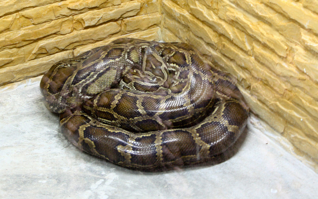 Update: Python on the Loose in Newton