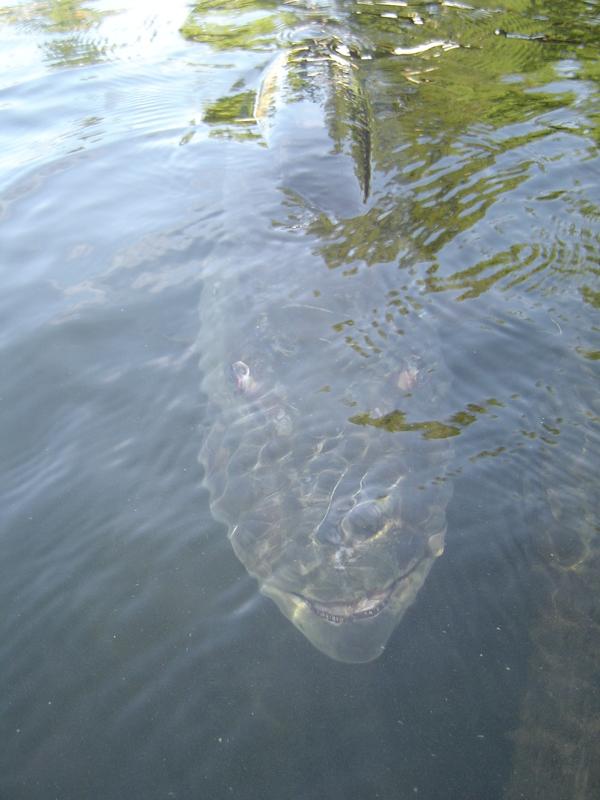 A photo of Mark Johnson's catch