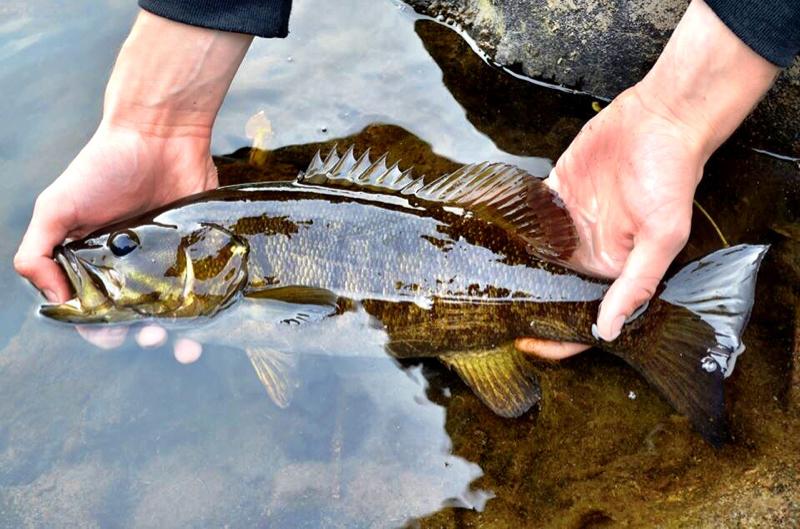 A photo of Cody Rubner's catch