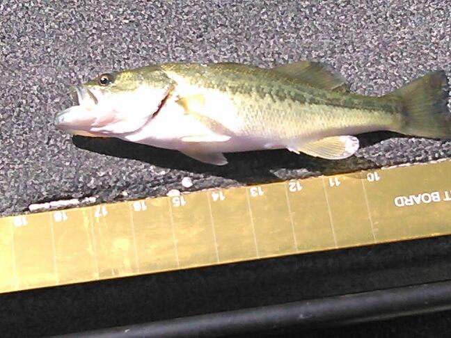 A photo of Randy YANCEY's catch