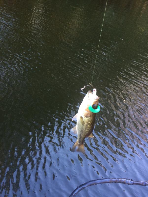 Upper Bear Creek Reservoir AL Fishing Reports, Map & Hot Spots