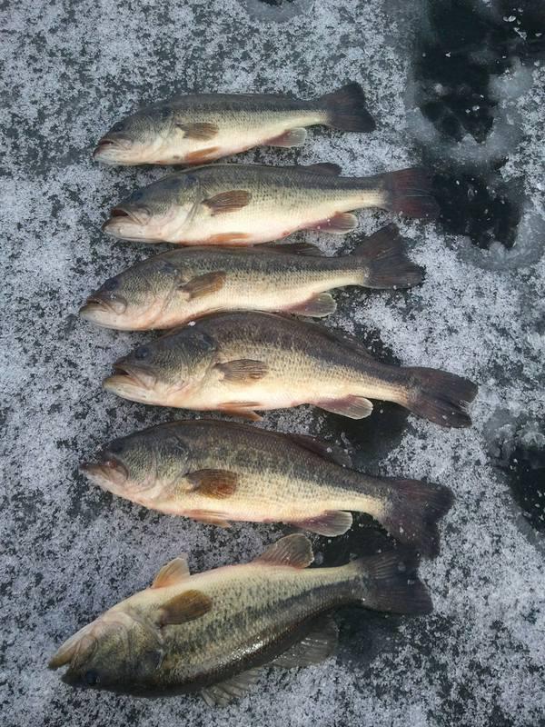 A photo of michael deushane's catch