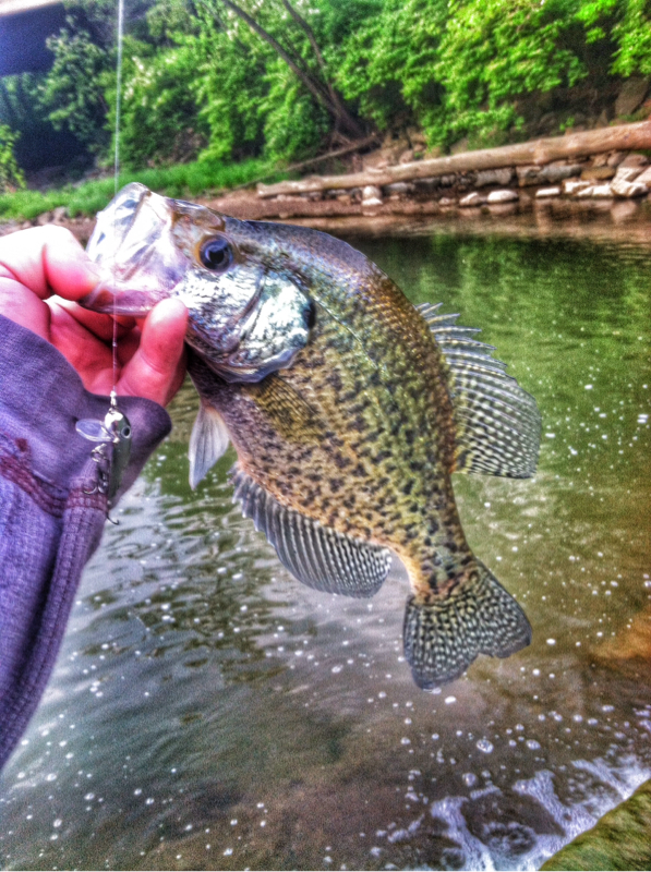 A photo of Joey Buttram - Willowpine Outdoors's catch