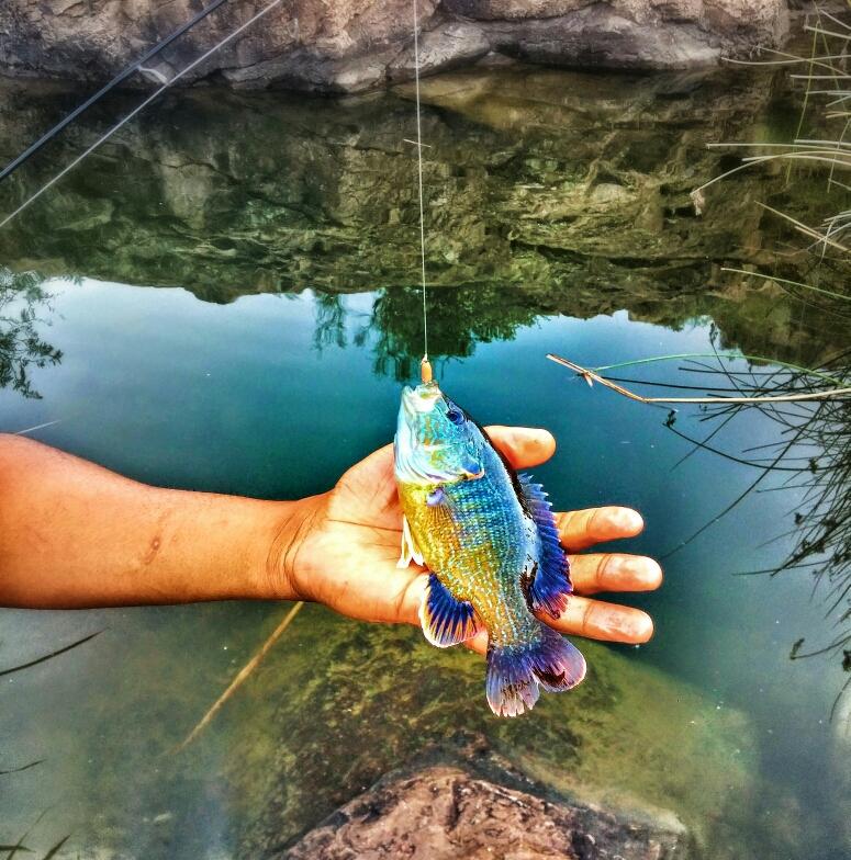 A photo of Travon Barnett's catch