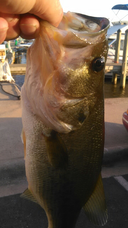 A photo of Aaron Bassmouth's catch