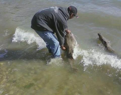 Caught a flathead catfish on lake ray hubbard a photo of joe joes catch publicscrutiny Images