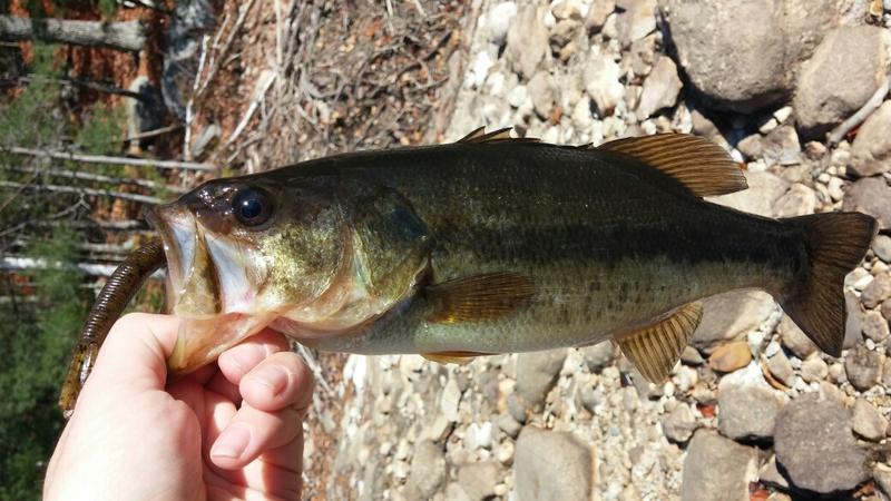 A photo of Matthew Anjeski's catch