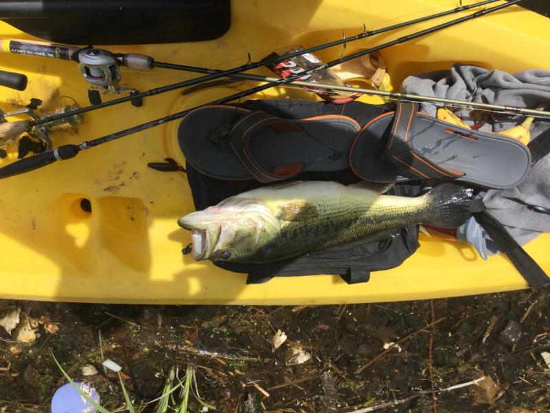 A photo of nat crossman's catch