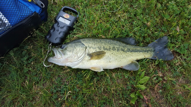 A photo of Jason Brown's catch
