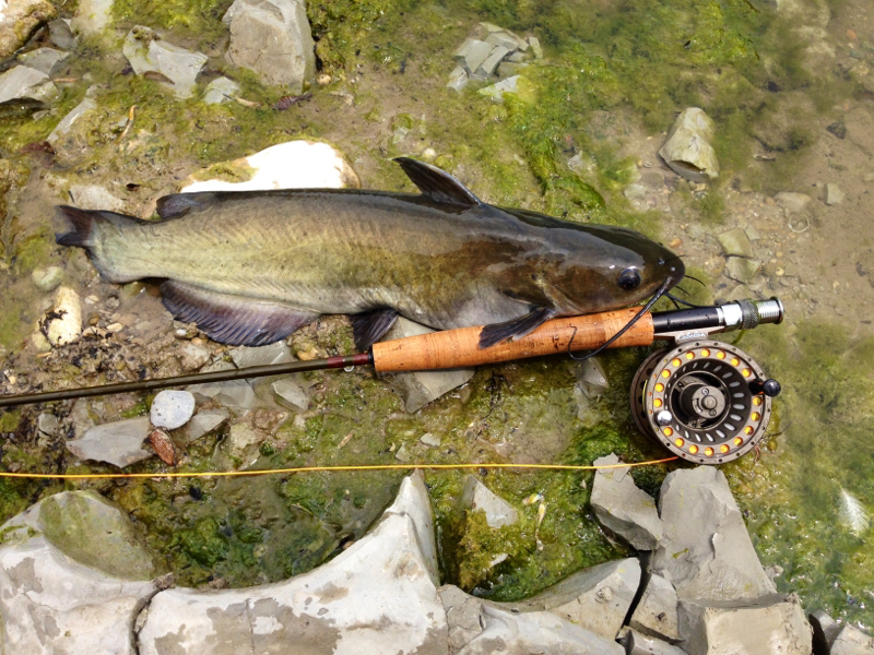 A photo of Chris Skinner's catch