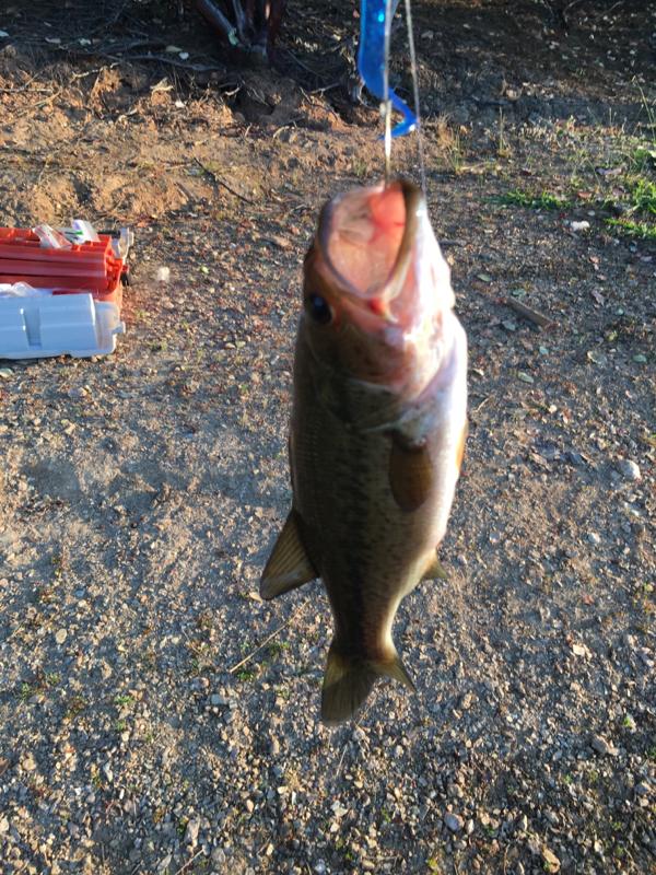 Paradise Lake CA Fishing Reports, Map & Hot Spots