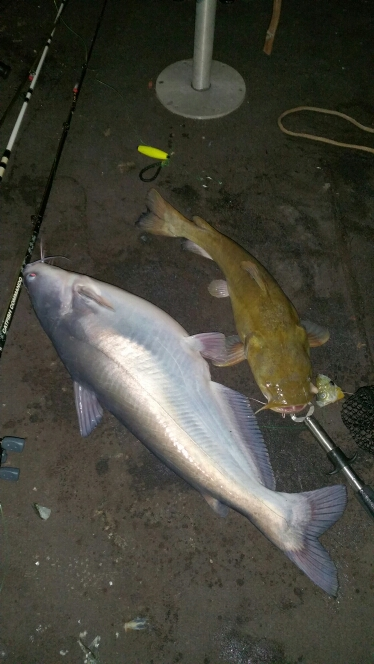 caught a blue catfish on lake wylie. Black Bedroom Furniture Sets. Home Design Ideas