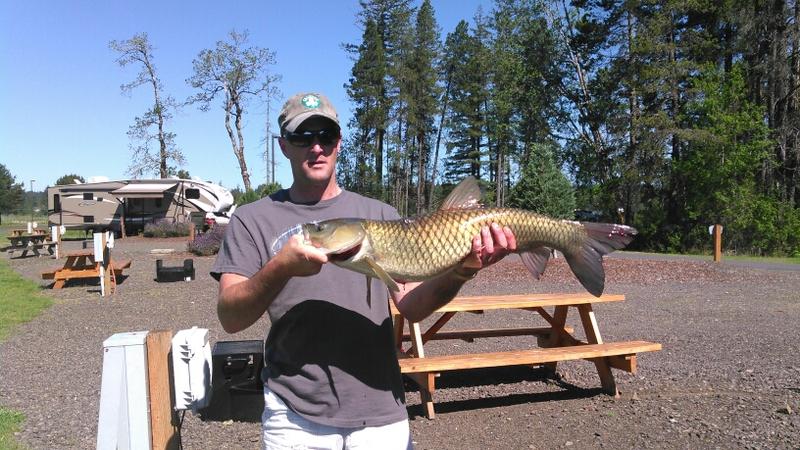 Silver lake washington fishing report immigrantsessay for Silver lake washington fishing
