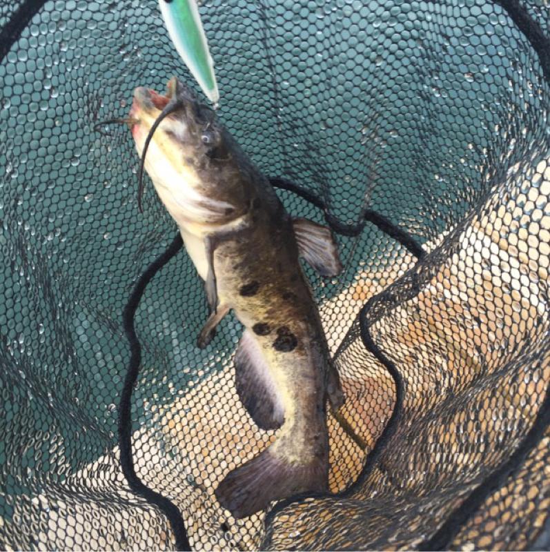 A photo of Matthew Ellis's catch
