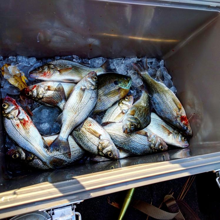 A photo of Nick Atkins's catch