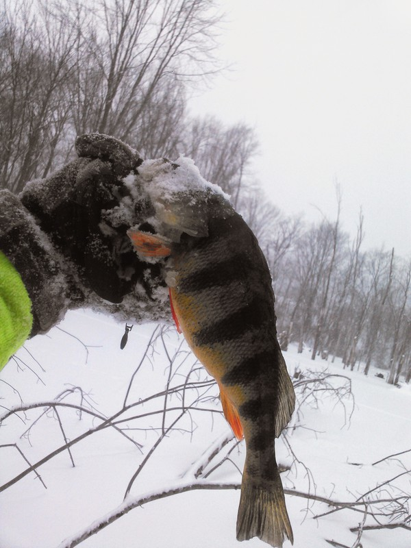 A photo of Pete Garm 's catch