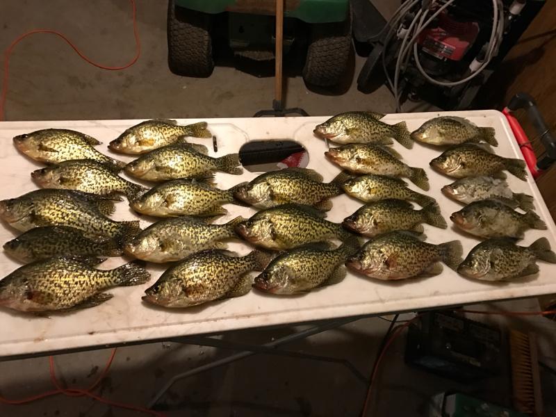 A photo of David  Sharp's catch