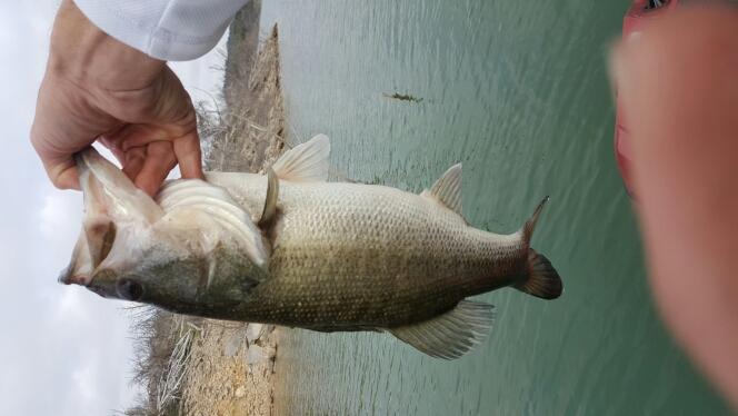 A photo of carl schulze's catch