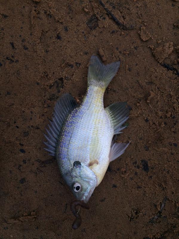 A photo of Michael Czawlytko's catch