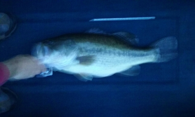 A photo of Neil Haney's catch
