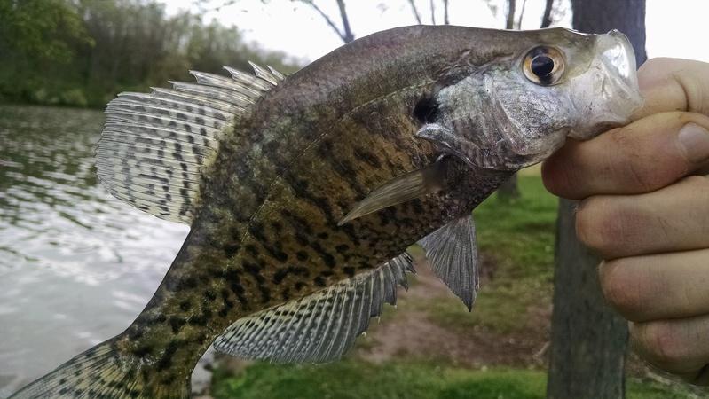 A photo of Jonathan Fish's catch