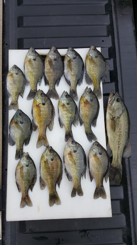 A photo of T Sen's catch