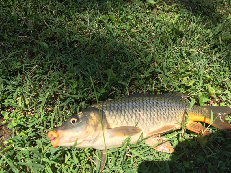A photo of kentuckyjules Tavis's catch