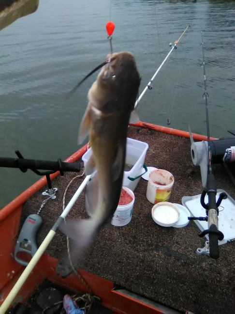 A photo of Dave Scott's catch