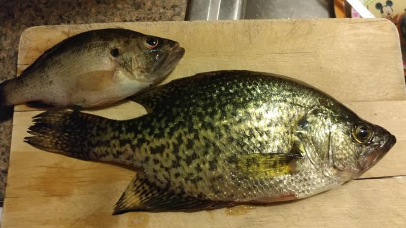 A photo of Franco Vizcardo's catch