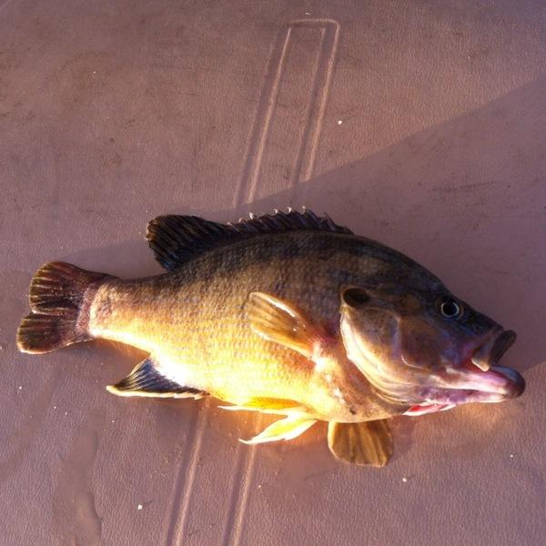 A photo of flyfisherman's catch