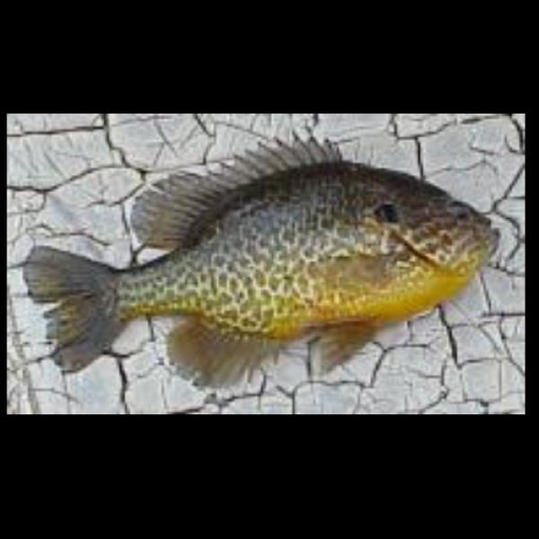A photo of fishing_man's catch