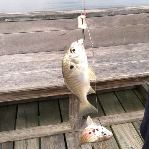 A photo of bcfish05's catch