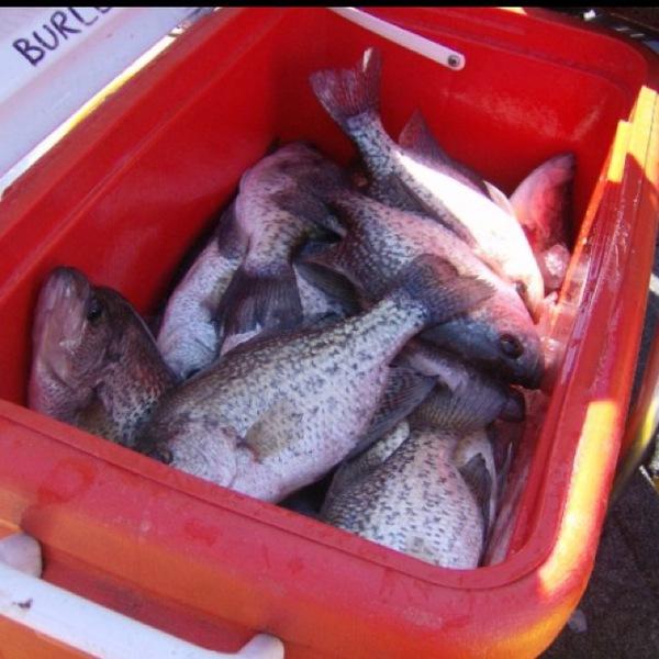 A photo of loganatorX09's catch