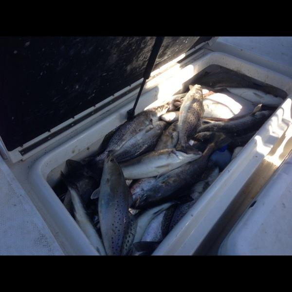 A photo of sarcher40's catch