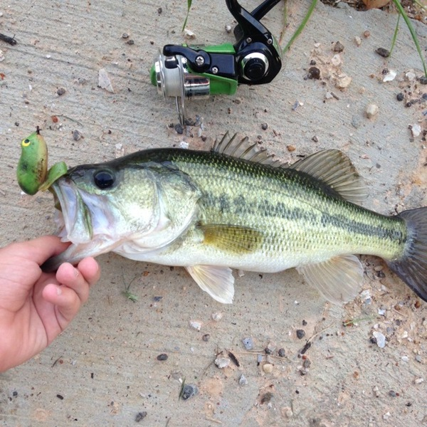 A photo of fishing4life1222's catch