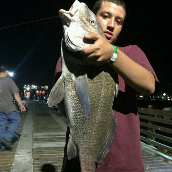 A photo of bestintheworld47's catch