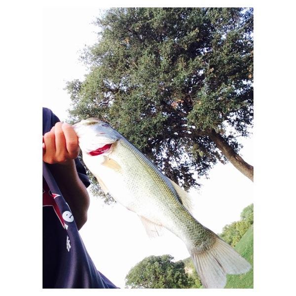 A photo of sr_ney's catch